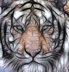 Nature Although many legends spun stories to explain the tiger's stripes, the real reason is adaptation of the animals to its environment camouflage.